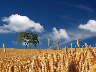 Weeds Among the Wheat: Reflection on the Sixteenth Sunday in Ordinary Time