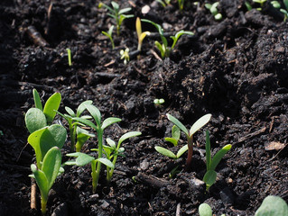 A Hope for Better Soil: Reflection on the Fifteenth Sunday in Ordinary Time