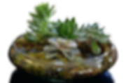 plants-in-glass-bowl-succulent-dish-gard