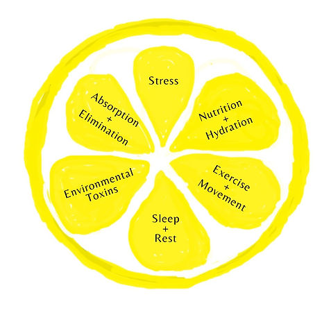 6 Pillars to Whole Body Health.jpg