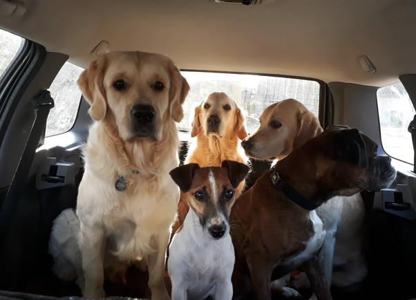 Tous en voiture pour une balade !