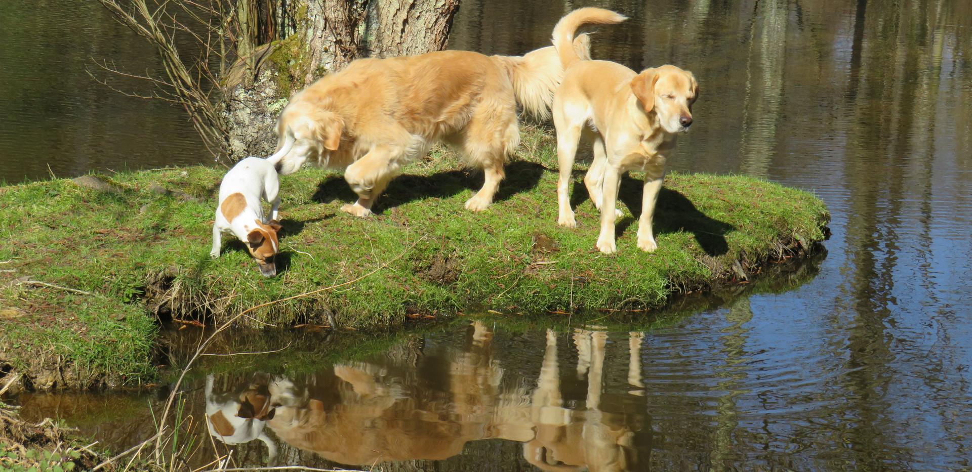 Balade à l'étang 1