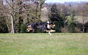 Illustration chien qui court pour article 1 : accueilir un chier