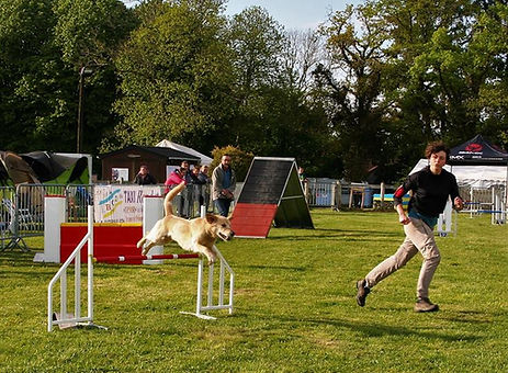 Guenji, concours d'agility 2018 | freeDogs