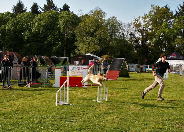 Concours d'agility 2018 ~ Guenji
