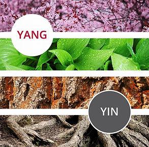 yang yin.jpg