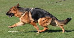 Videx Rakell gaiting