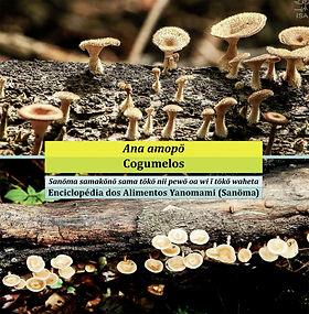 capa_cogumelos.jpg