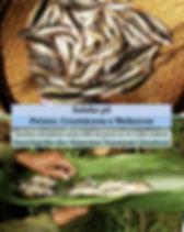 capa_peixes.jpg