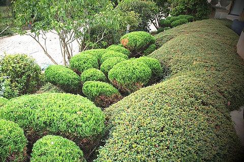 Taille en nuage ou Niwaki