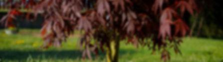 jardiservice-1861_modifié.jpg