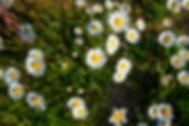jardiservice-1843.jpg