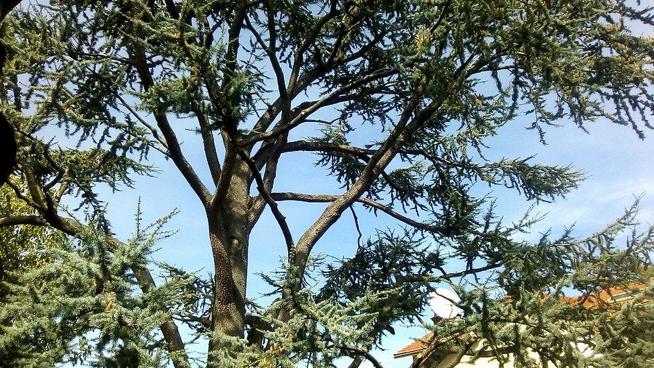L'élagage des arbres difficiles d'accès