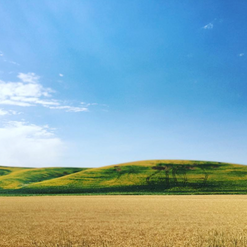 """""""The rolling Palouse"""""""