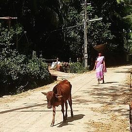 Balancing acts and cows.jpg