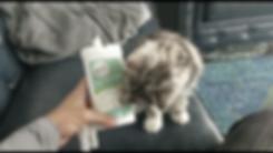 Screen Shot 2018-08-01 at 10.28.16 PM.pn