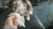 Screen Shot 2018-08-01 at 10.28.56 PM.pn