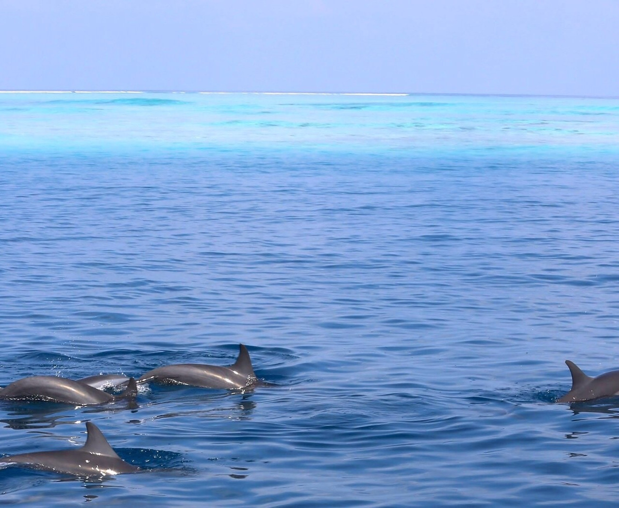 Kanuhura dolphins (1)-min
