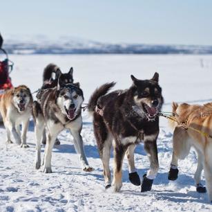 Девятка лучших развлечений для любителей снежных приключений и гурманов высокой кухни