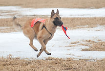 specialty dog training classes in newfoundland and labrador
