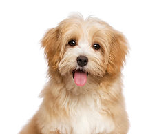 Best puppy training classes in st. john's newfoundland and labrador