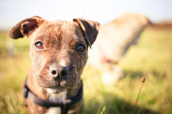East Bay puppy training