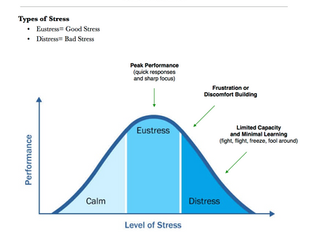 Effects of Eustress and Distress on Dog Behavior: The Stress Curve