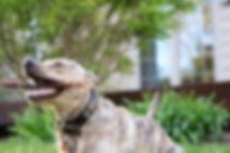 Choose Positive Dog Training