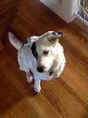 SF SPCA dog