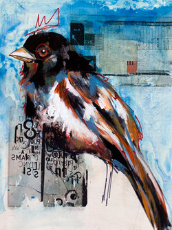 WEB-BLUE BIRD.jpg