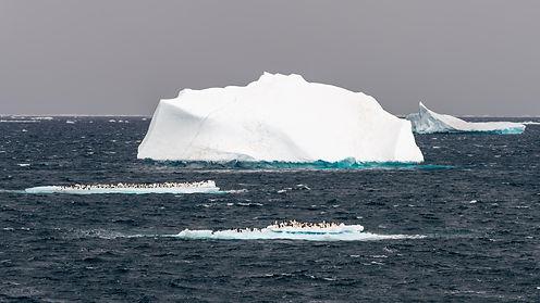 penguins-drifting-on-an-ice-floe.jpg