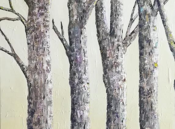 Tree Trunks 80x60cm