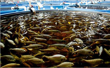 Fish Tank (1).jpg