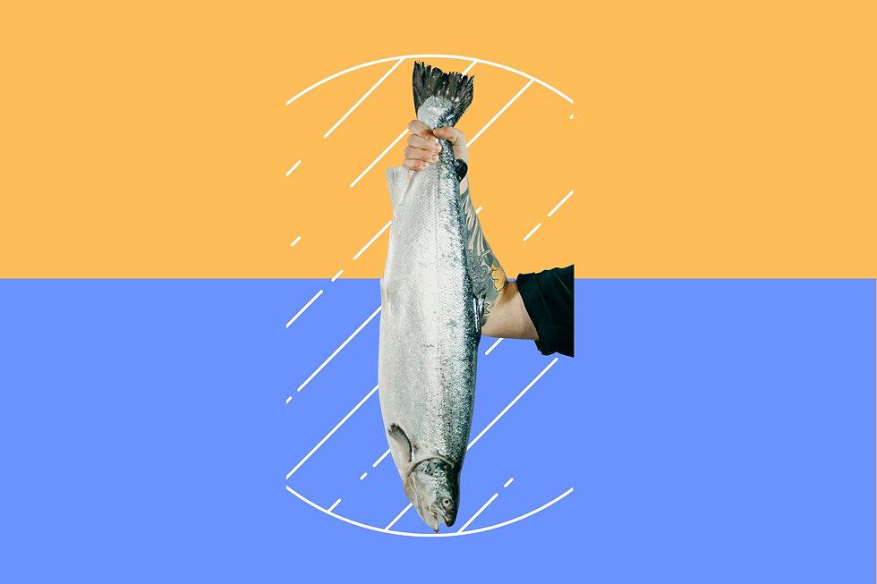 Cópia de Temos peixes frescos !.jpg