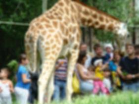 зоопарк3.jpg