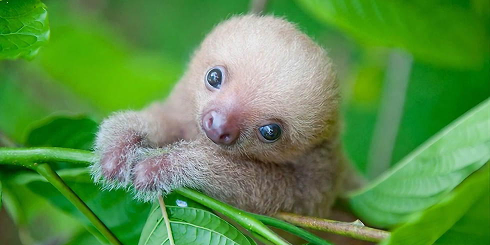 Wonderkids: Cute Creature Creations