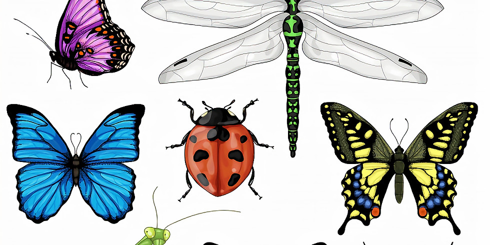 Kids Craft: All About Bugs