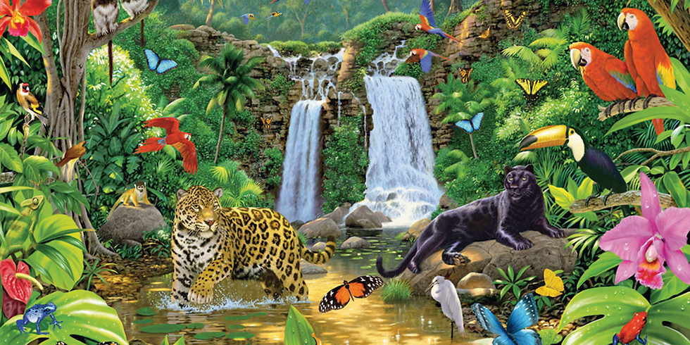 Wonderkids: Wildlife Creations