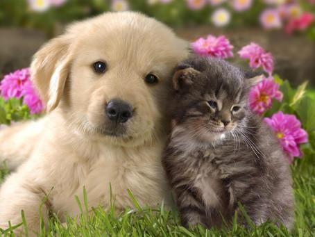 Cuidado: seu pet pode transmitir infecções