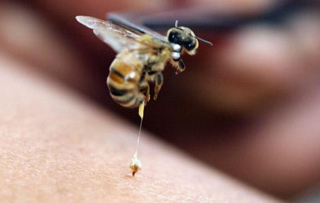 Mortes por Abelhas alertam sobre importância do Soro Antiapílico