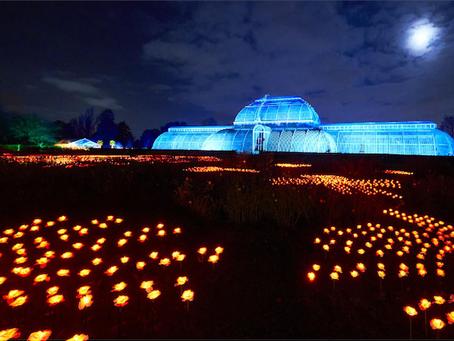 Christmas at Kew - The Royal Botanical Gardens Turned Into A Glittering Winter Wonderland