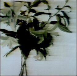 b_2005_12