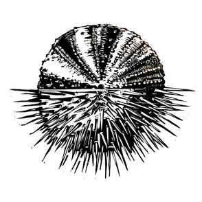 Urchin Test