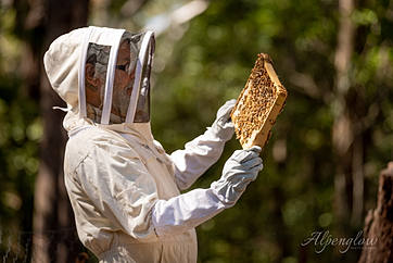 Inspecting the Bees by Alpenglow Photography