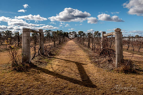 The Vineyard, Stanthorpe. Queensland