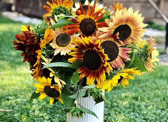 Saatgut Sonnenblumen mix