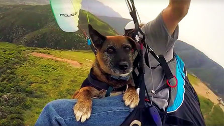 tandem flight, paragliding, paragliding lessons, learning to paraglide, NeverLand Paragliding, paragliding school, Los Angeles, California, San Bernardino, dog flying, dog paragliding, learn to fly, fly tandem, Stephen Nowak, paragliding U.S.A., Andy Jackson Airpark, paraglider, paraglidng instruction, paramotor, ppg, powered paragliding, paragliding course, solo paragliding,
