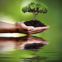 Ökologie & Ökonomie