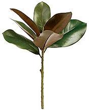 magnolia leaves.jpg