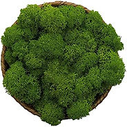 moss bowl.jpg